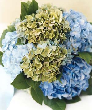 Bouquet of hydrangeas and lemon leaves