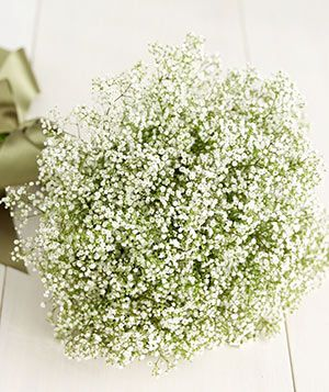 Your Breathtaking Baby's Breath Bouquet