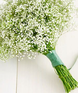 How to Transform Baby's Breath