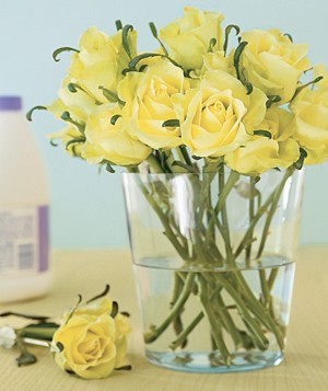 Yellow roses with bleach in background