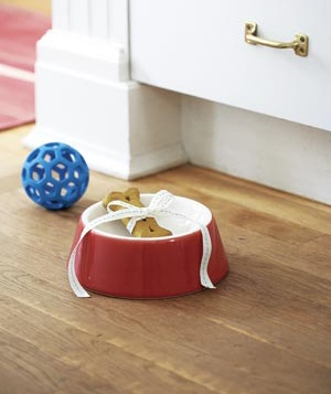 dog biscuit in dog bowl