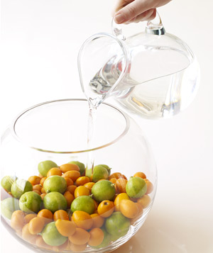 Add water to fish bowl of Key limes and kumquats