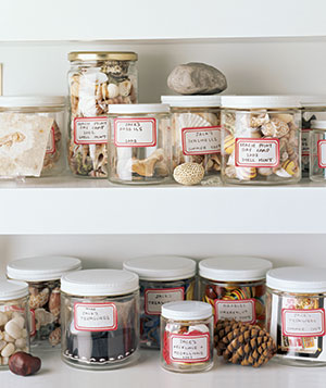 Shells and rocks stored in labeled jars on shelves