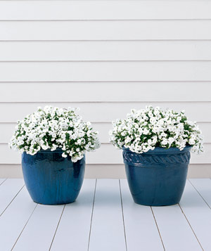 Ceramic pots are porous, allowing roots to breathe, and a glazed finish helps conserve moisture.