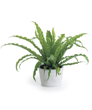 Houseplants Can Remove Certain Pollutants
