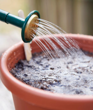 Watering hose and soil in pot - mistake 4