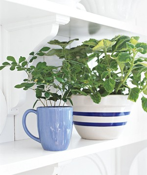 plant in bowl and cup