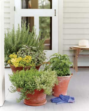An assortment of herbs can be planted in one pot, so long as their care requirements are compatible.