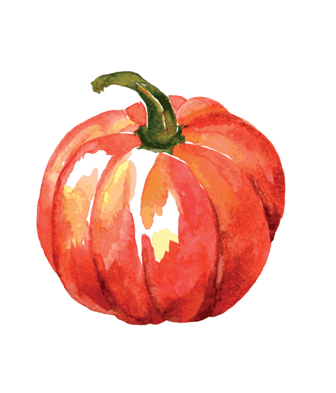 Types of winter squash - Pumpkin squash illustration