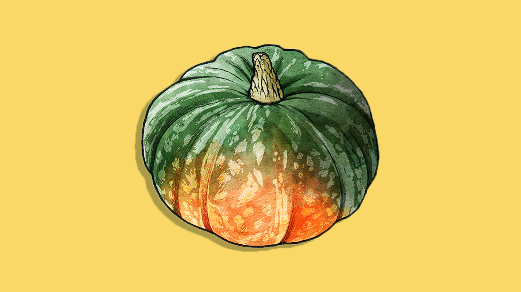 Types of winter squash - picture of squash variety