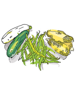 Illustration of zucchini, green beans, and corn on the cob