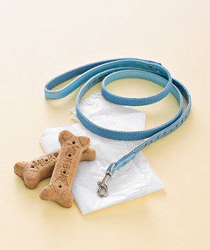 Dog biscuits and a leash