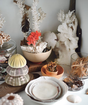 Arrangement of terracotta bowls, shells and ornaments from the sea