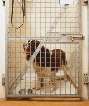 Dog in kennel cage