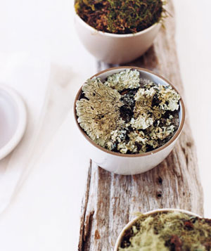 Moss in small bowls