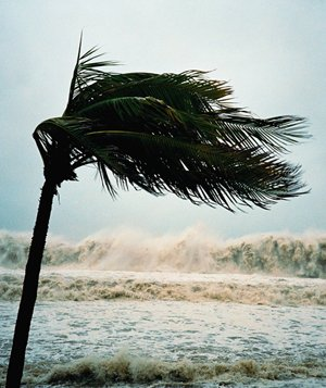 Palm tree blowing during hurricane