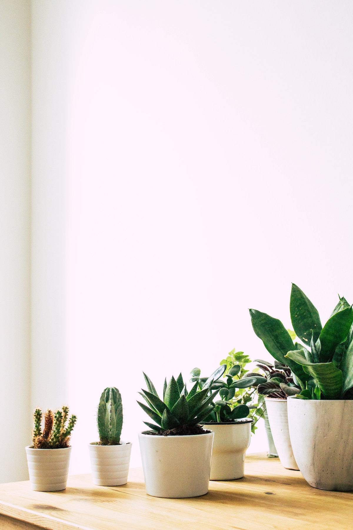 Mini cacti and succulents on a table