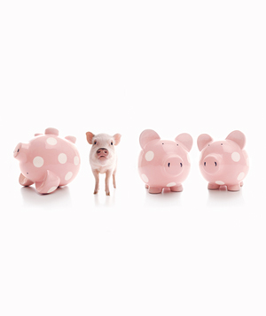 Pig with Piggy Banks