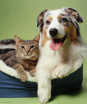 Dog and cat laying in pet bed together