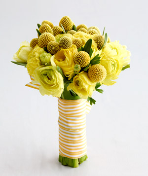 Yellow Ranunculus and Billy Balls - Landscape