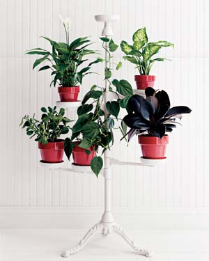 Potted plants on a tiered stand
