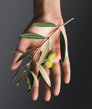 Hand holding an olive branch