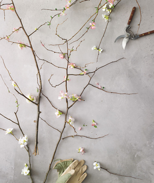 How to arrange flowers, Quince on a table with pruners