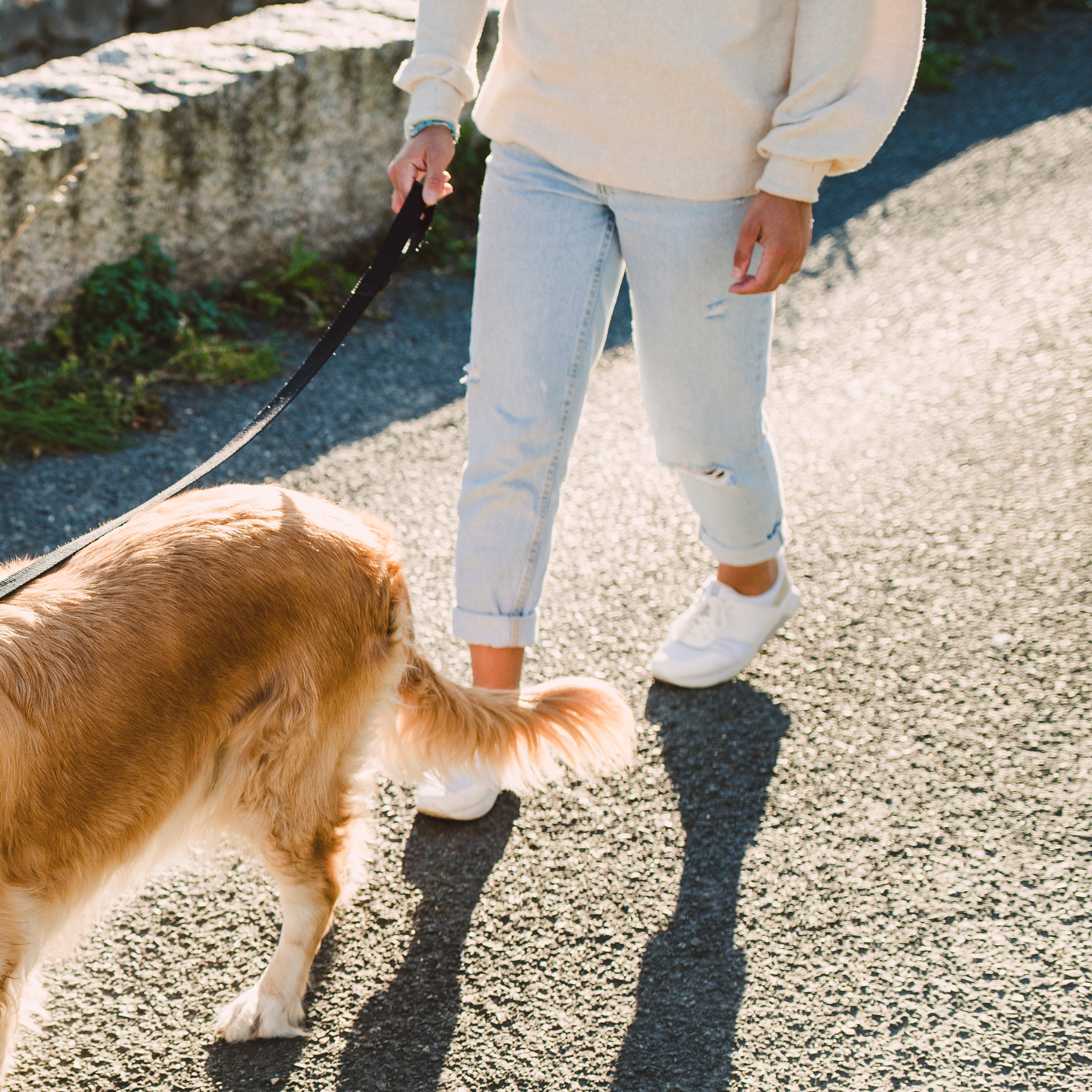 Ways to Be Healthy Every Day: woman walking golden retriever outside