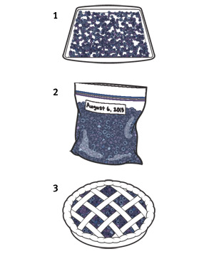 Illustration of how to freeze and thaw blueberries