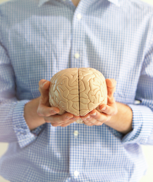 Man holding a model of a brain