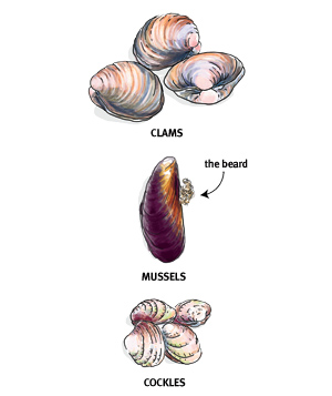 Clams, mussels, and cockles