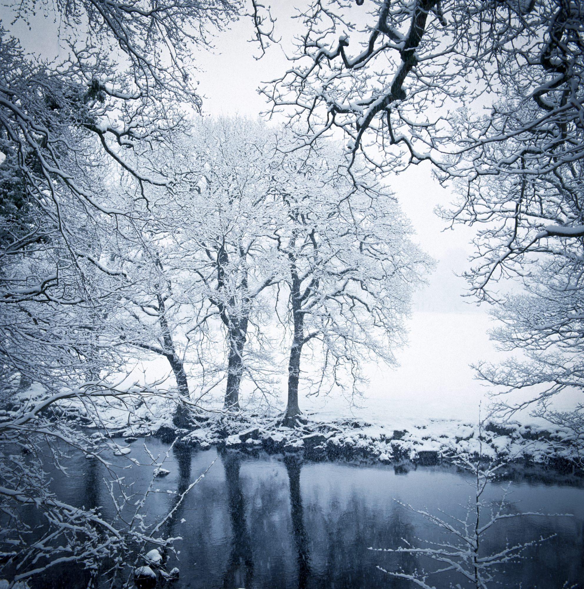 Snow-covered trees along a creek