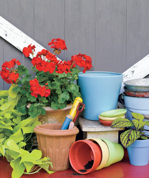Garden with a red geranium, pots, and tools