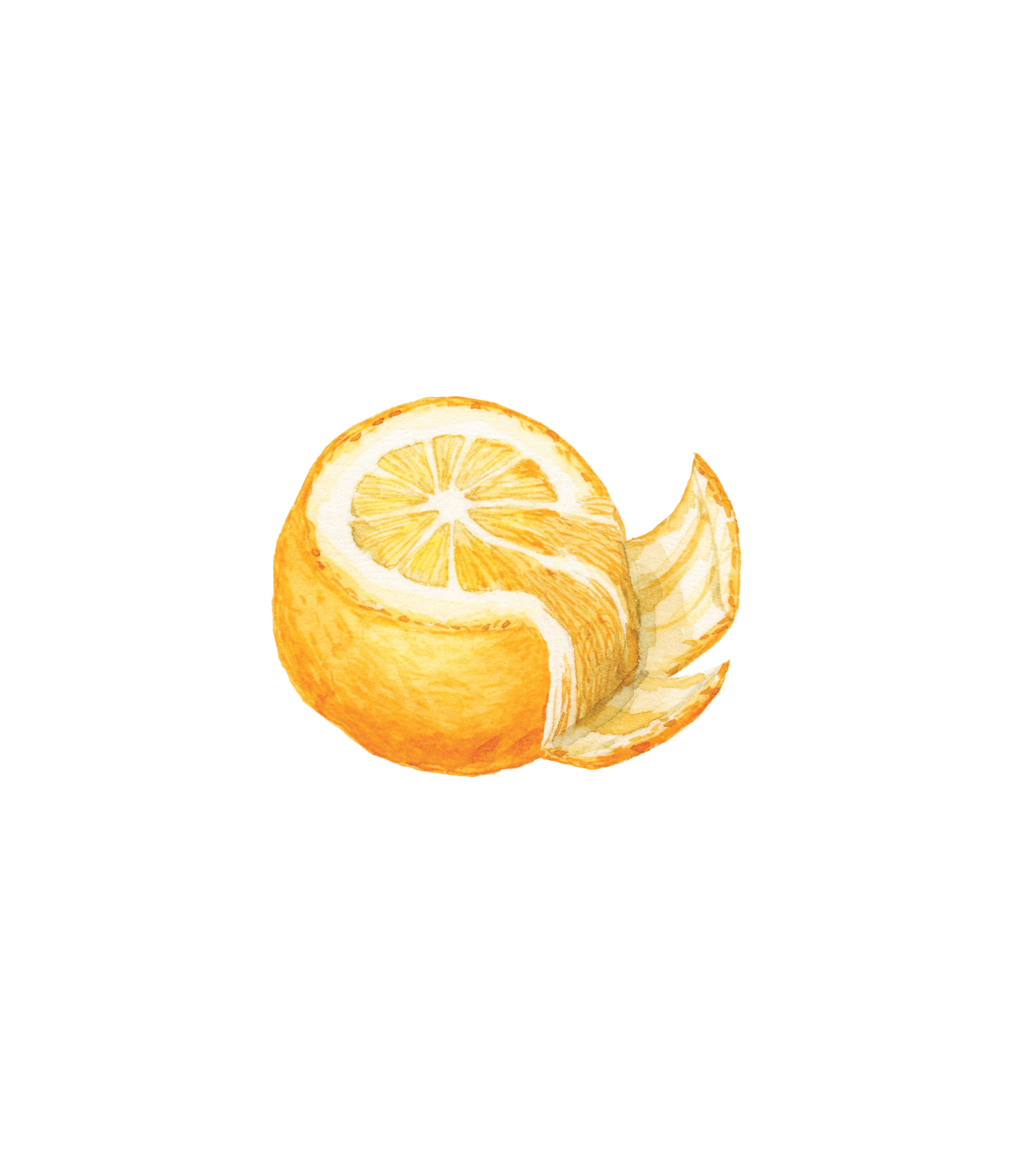 Illustration of how to segment an orange
