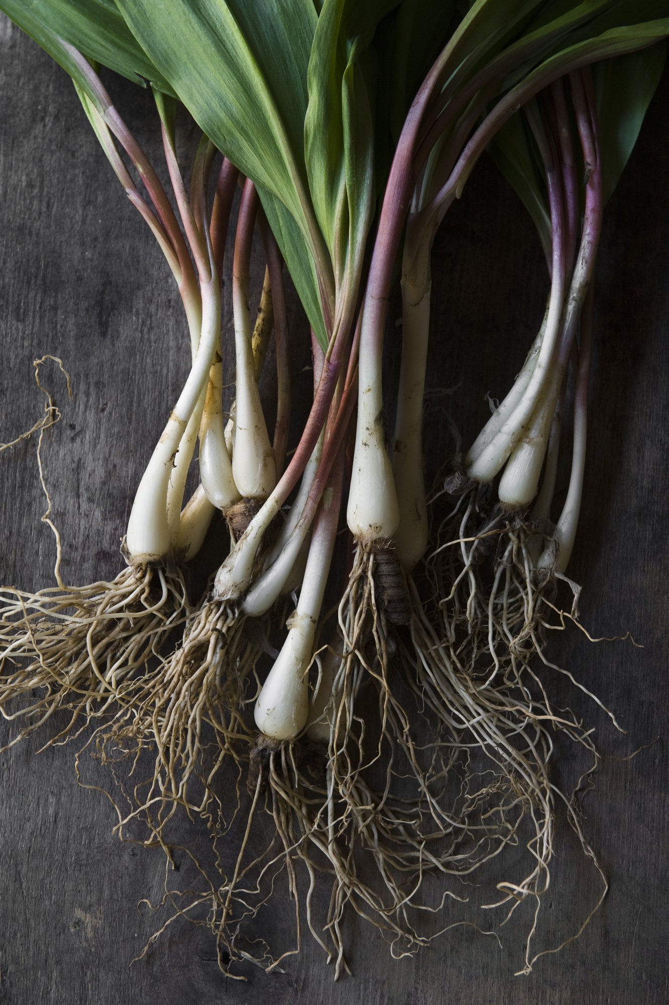Wild ramps on table