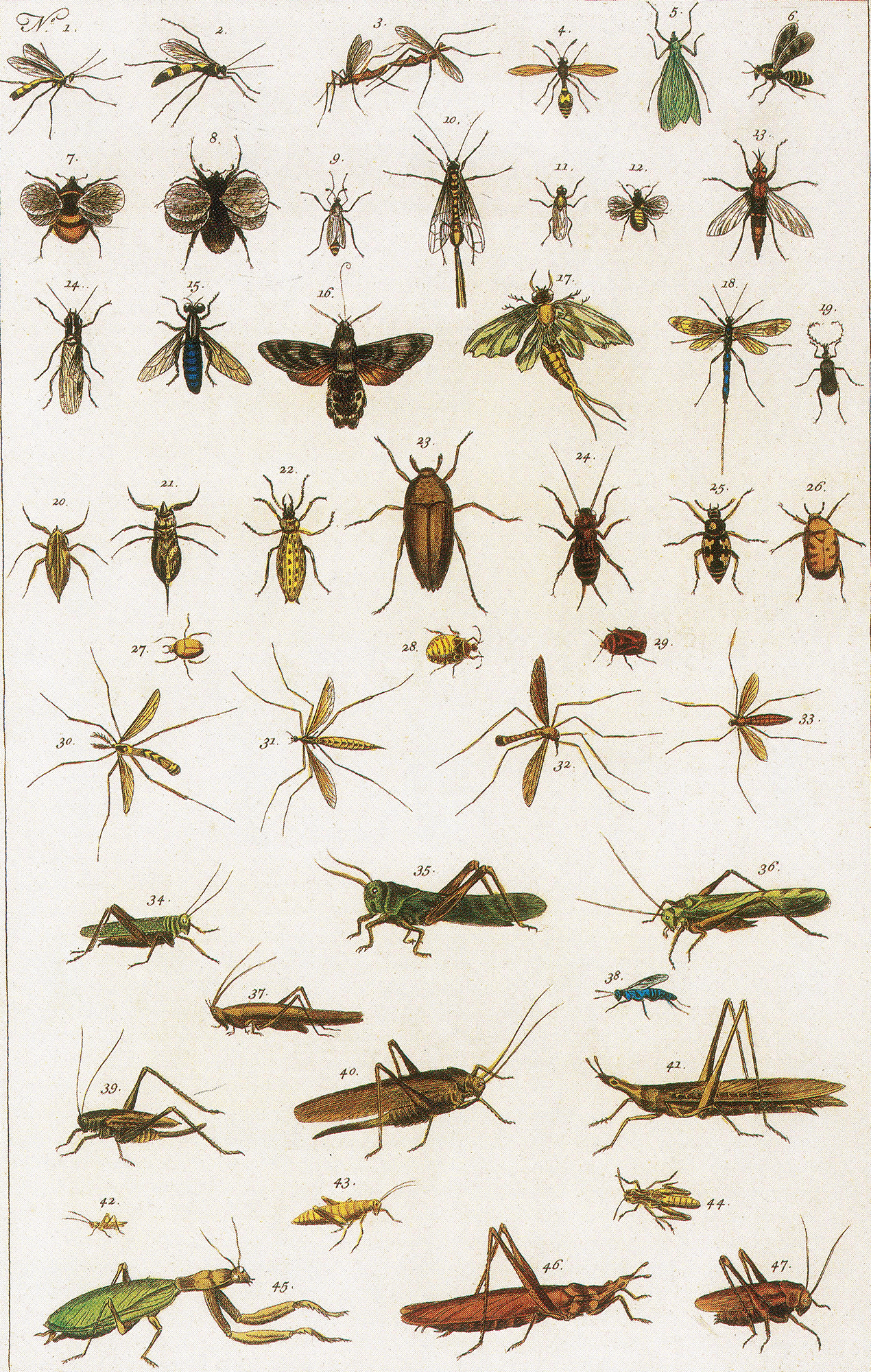 Illustration: Insects, 1734