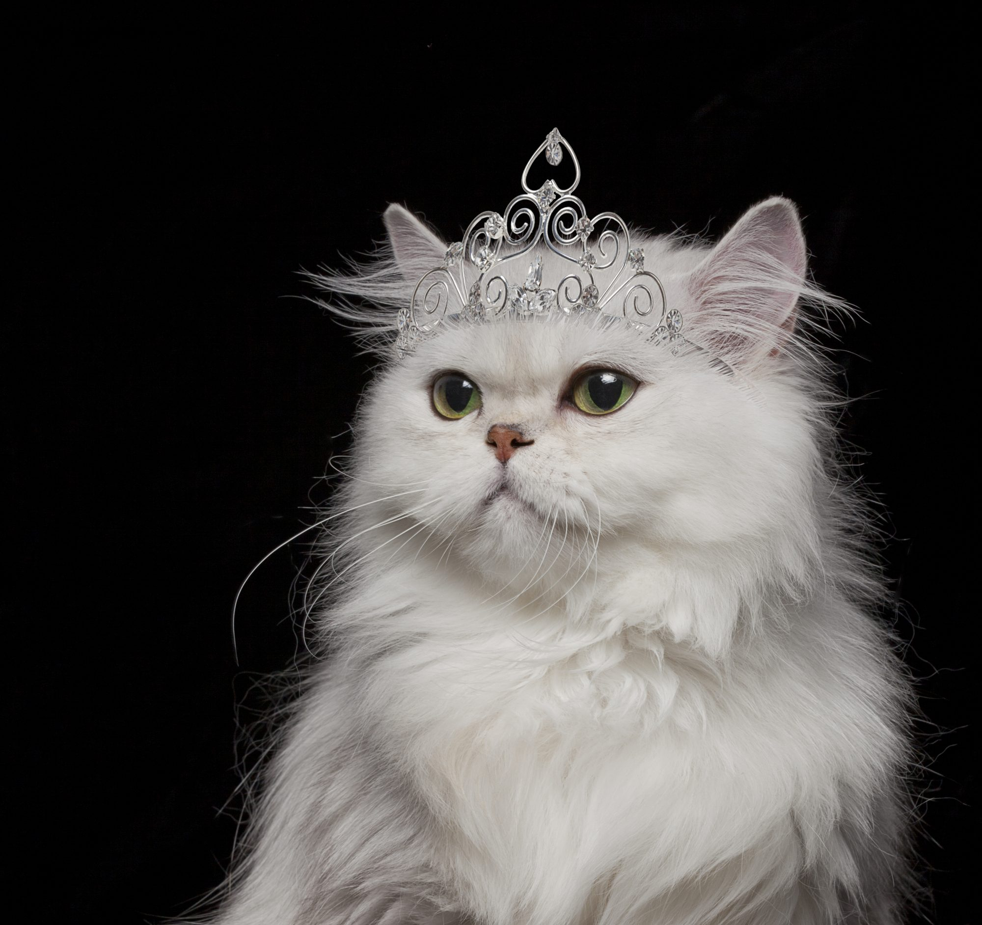 Cat wearing tiara