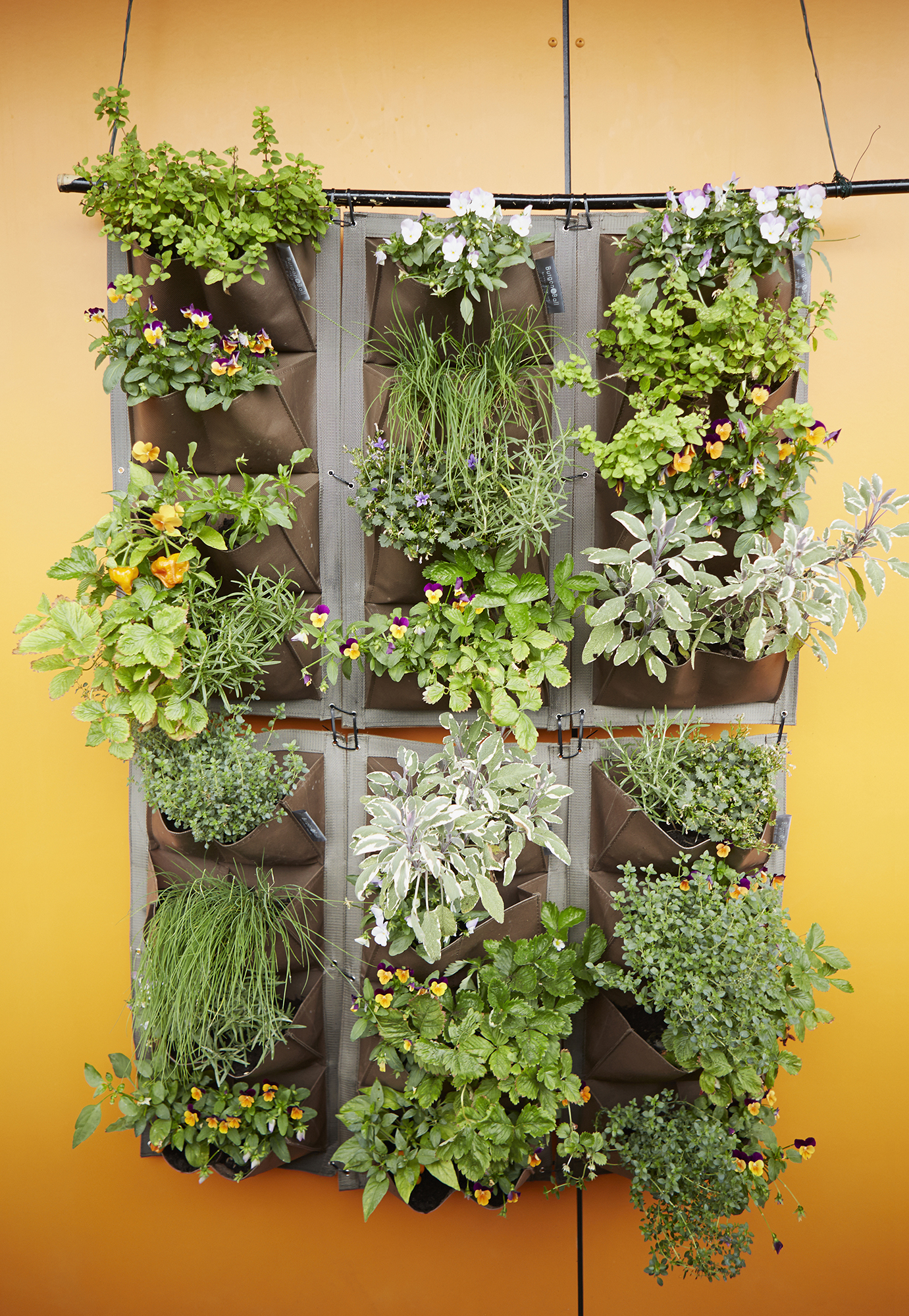 Try a Vertical Hanging Garden
