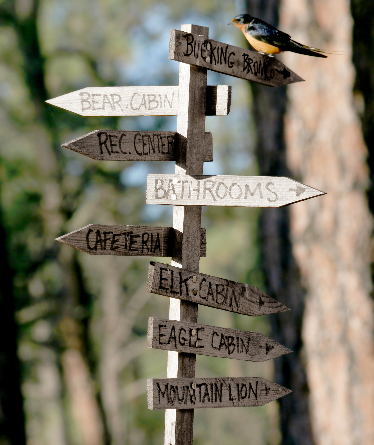 Summer camp directional signs