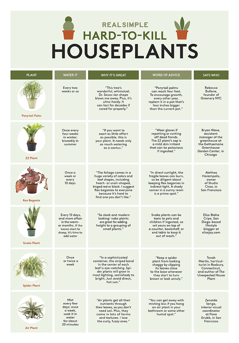 Hard to Kill Houseplants Chart