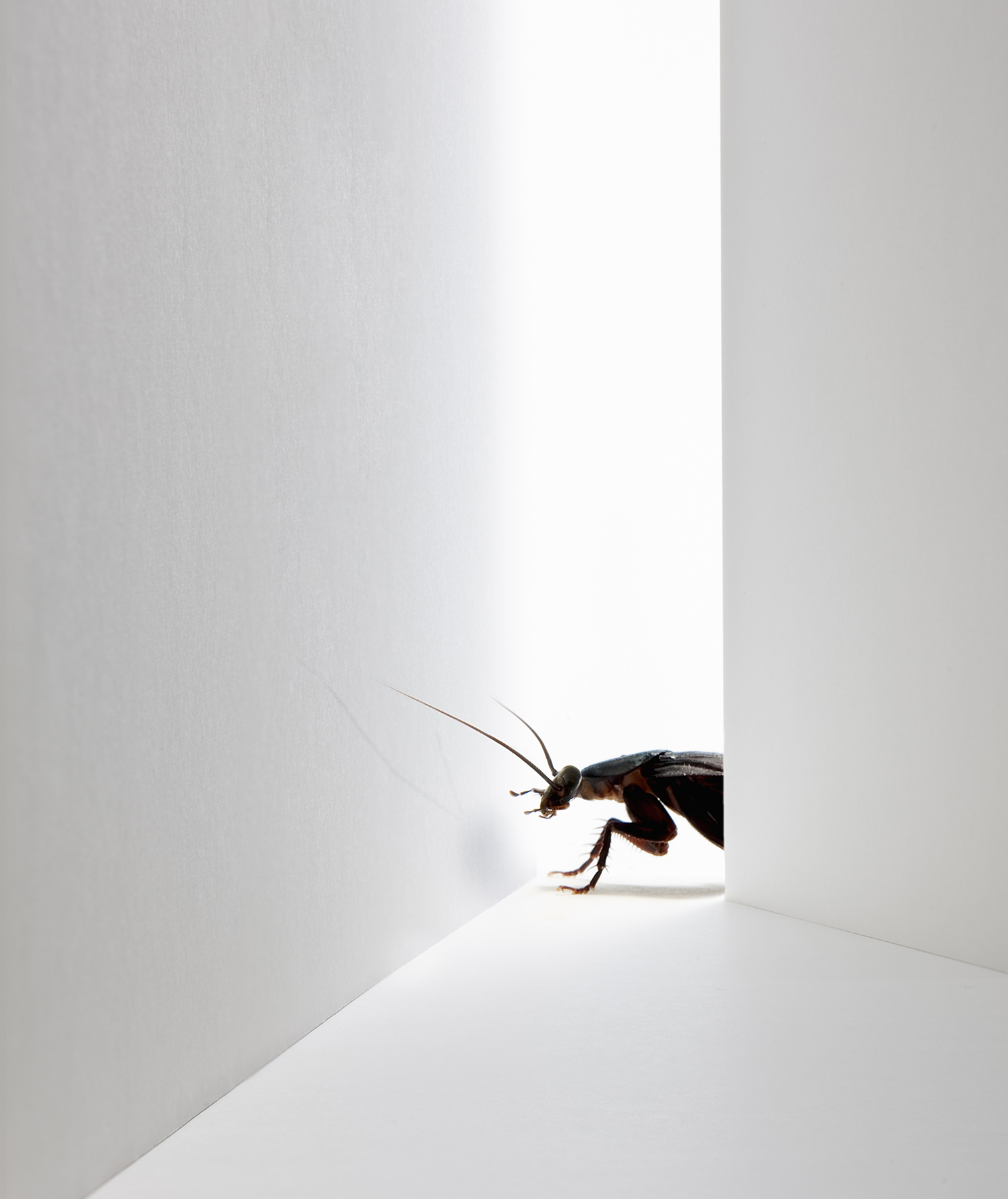 Cockroach turning corner