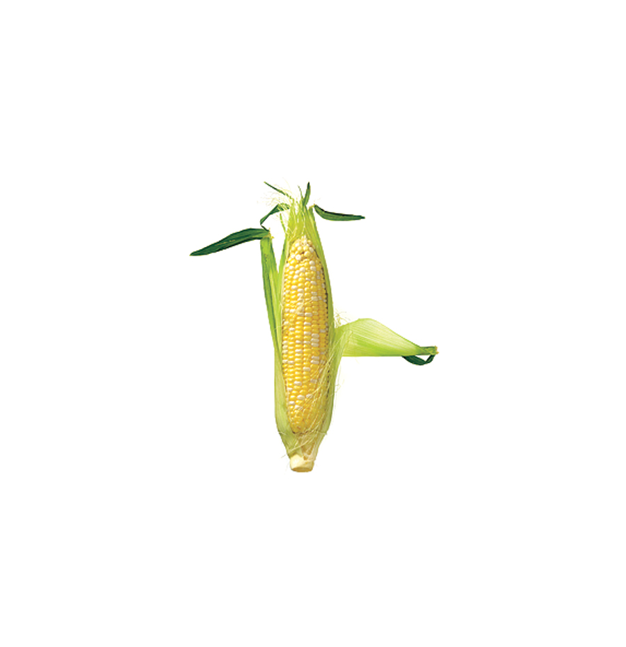 One ear of corn