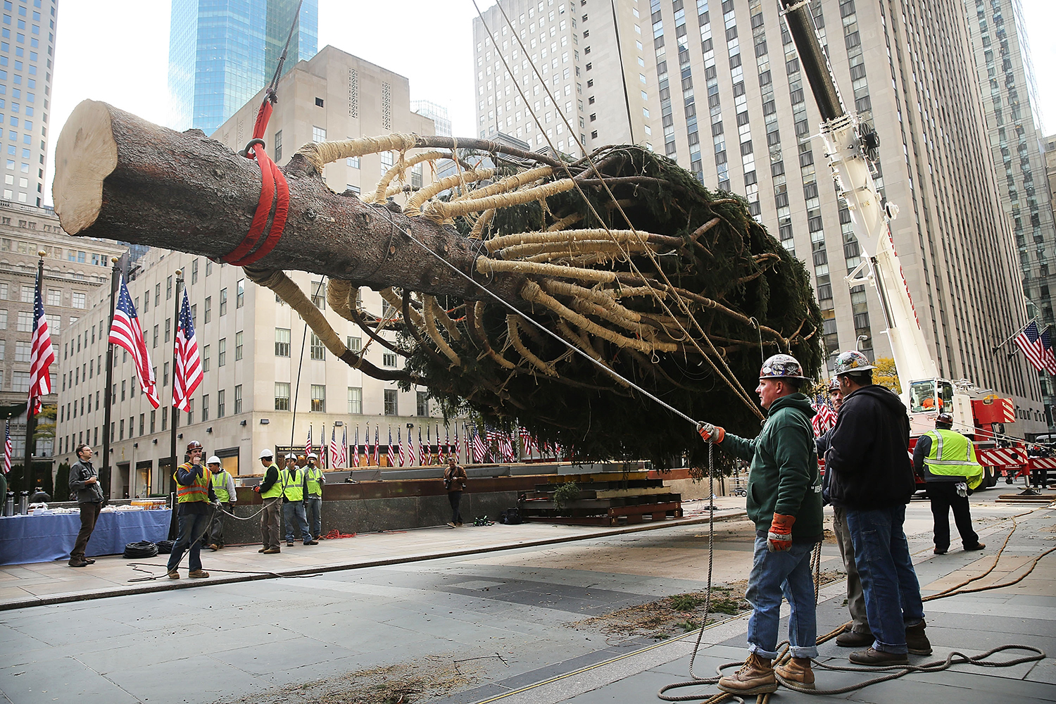 Rockefeller Christmas Tree Selection