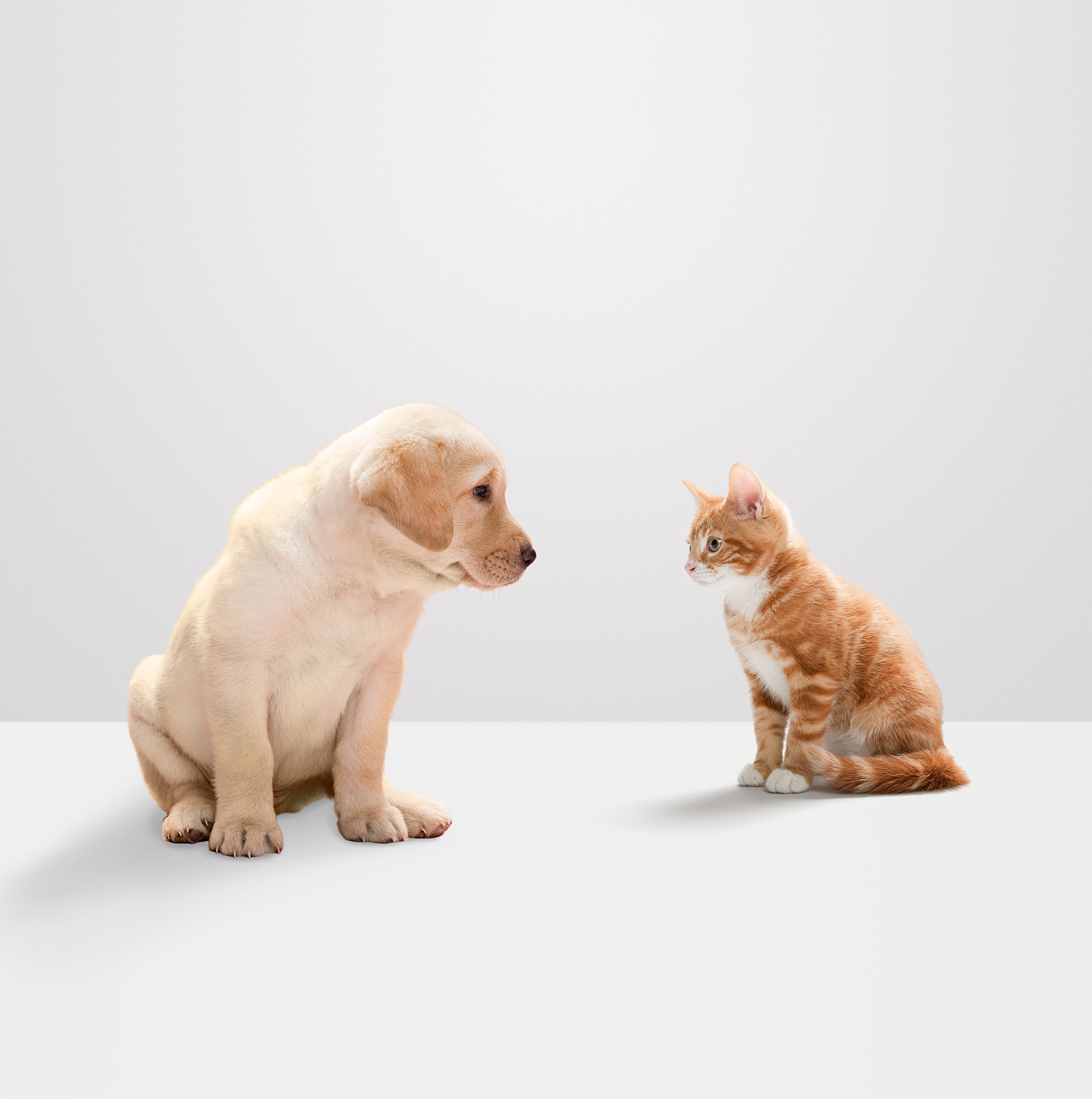 Puppy and kitten face off