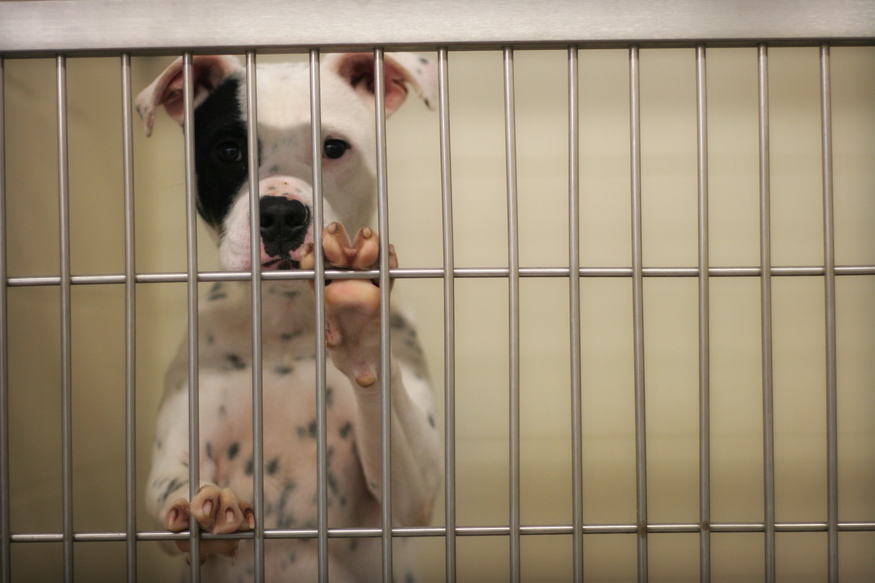 Dog in crate at shelter