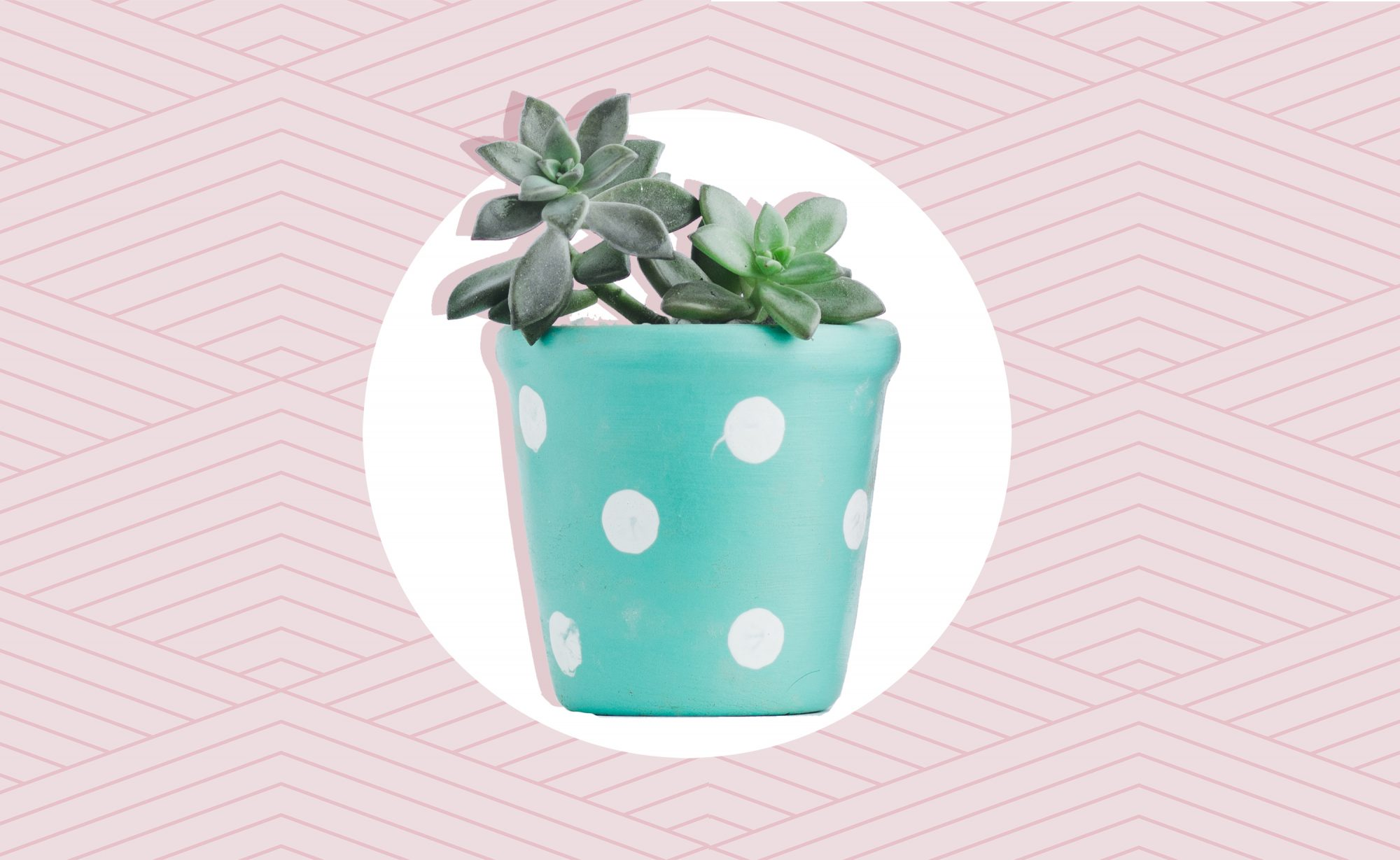How to Create a Cool, Summer-Ready Bedroom, plant in polka dotted pot