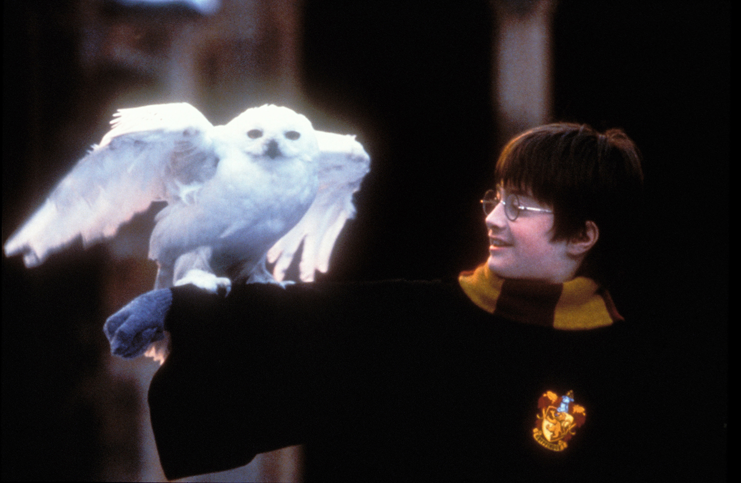 Harry Potter With Owl