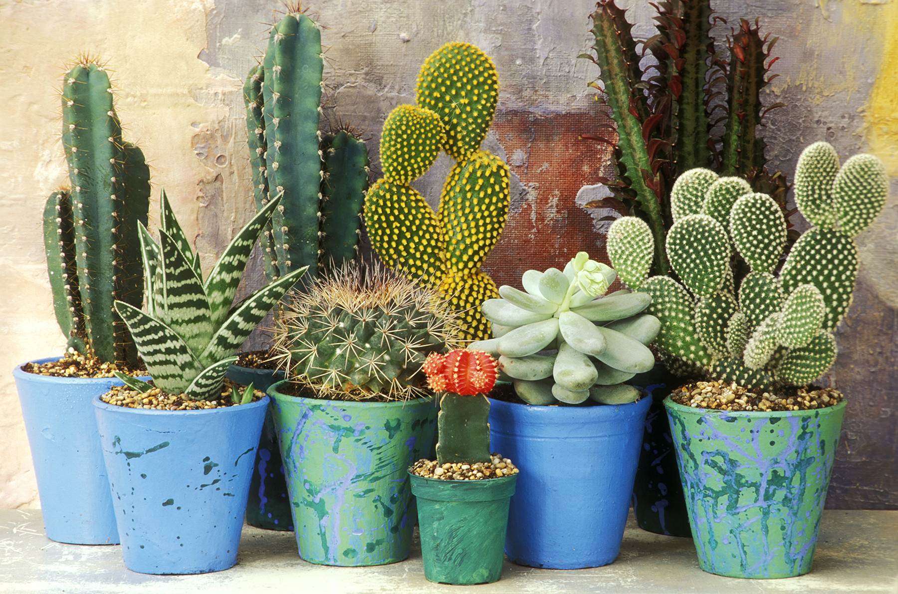 In an Overly-Heated Room: Cacti and Desert Plants
