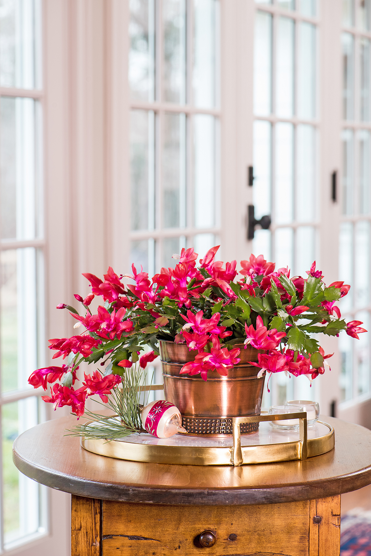 In a Drafty Room: Christmas Cactus