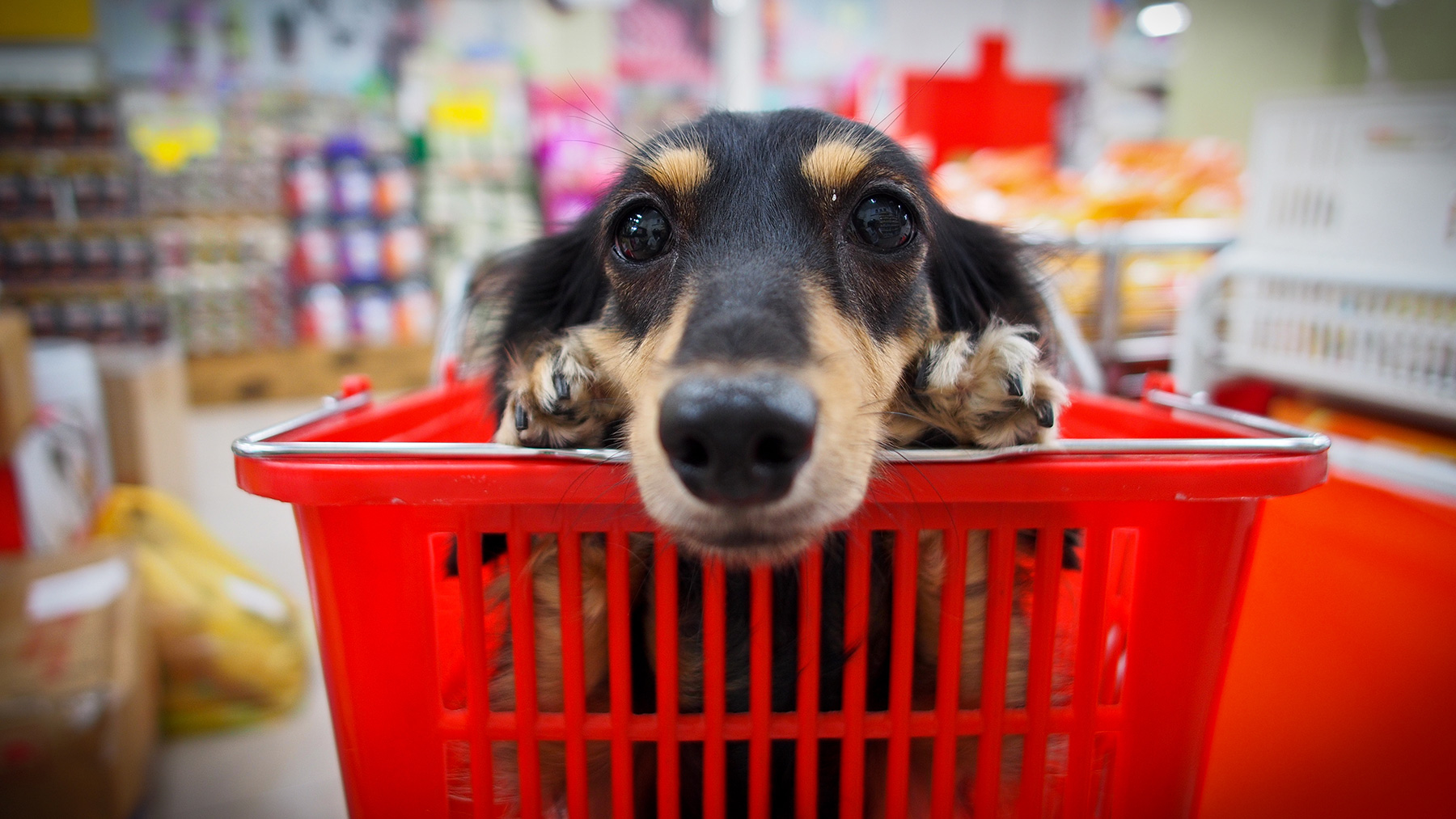 Dog in shopping basket